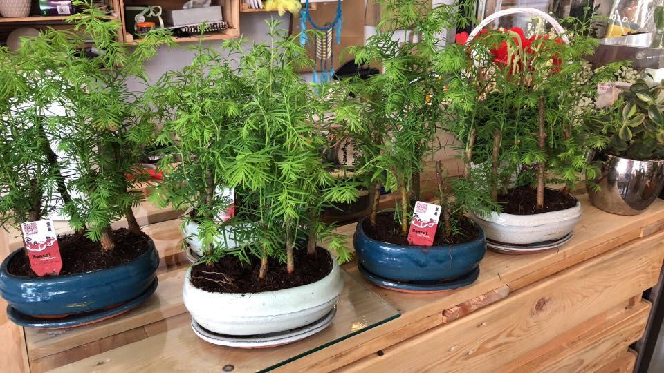 5 pomysłów na Dzień Chłopaka dla zielonych